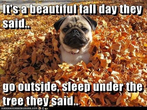cheerful fall memes