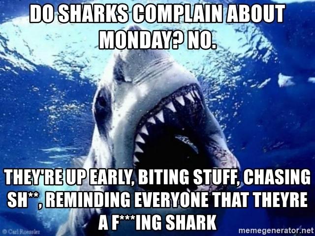 cheerful shark meme
