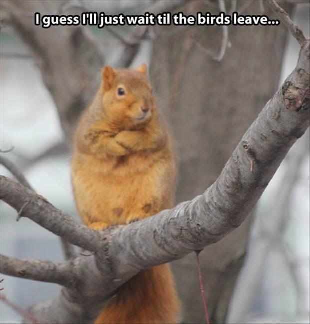 cheerful squirrel meme