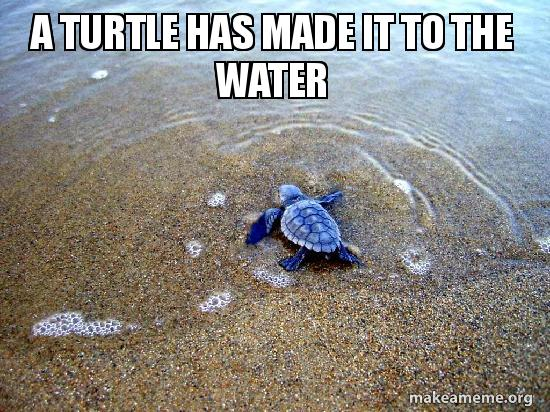 cheerful turtle meme