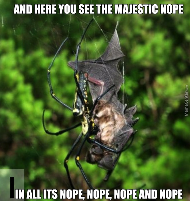 cheerfull spider memes