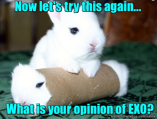 chucklesome bunny memes