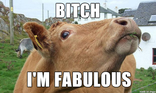 chucklesome cow meme