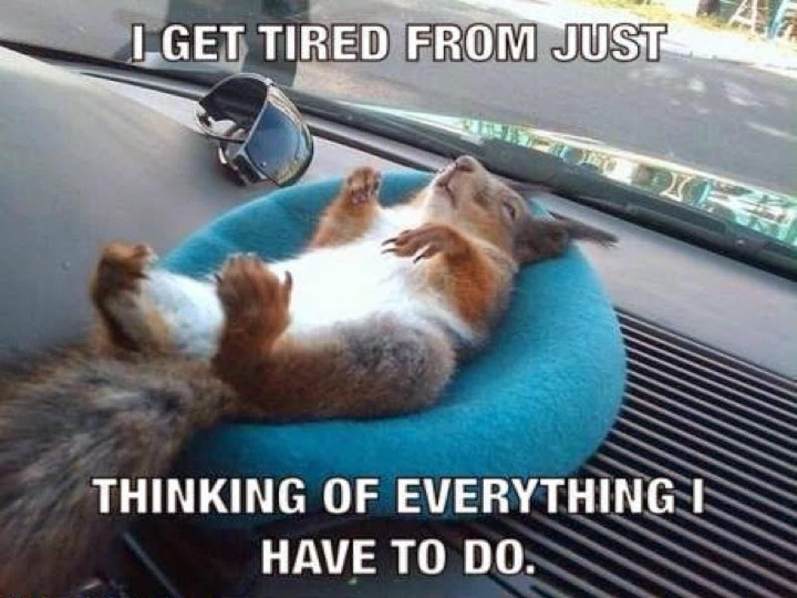 chucklesome squirrel meme