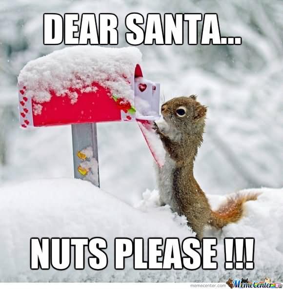 comic squirrel meme