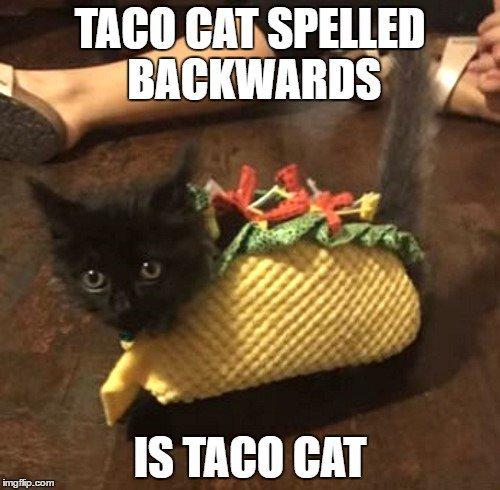 comic taco meme