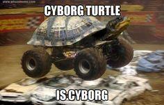 comic turtle meme