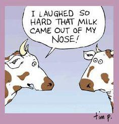 comical cow meme