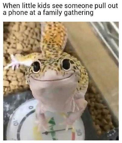 comical family memes