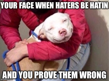 comical pitbull memes