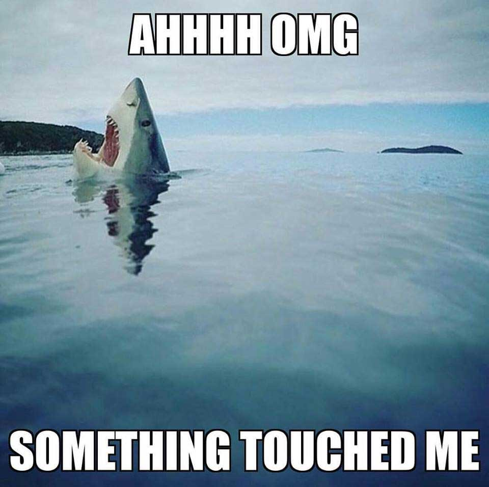 comical shark meme