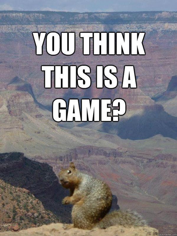 comical squirrel meme