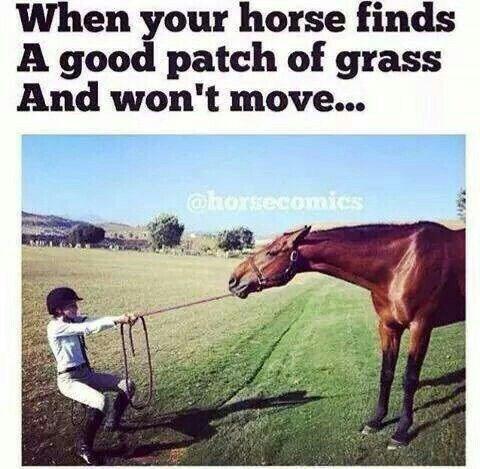droll, horse memes