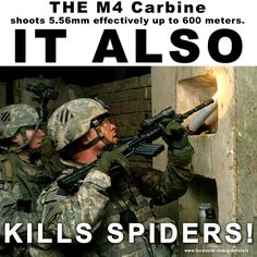 droll spider memes