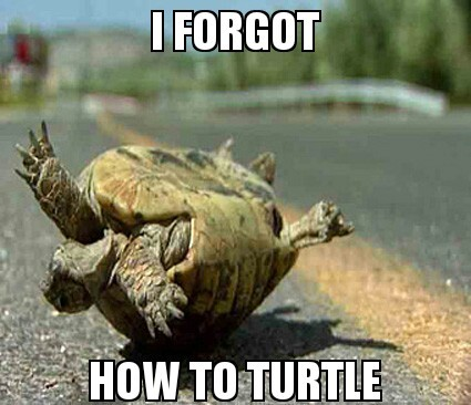 droll turtle meme