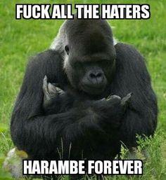entertaining Harambe the Gorilla memes