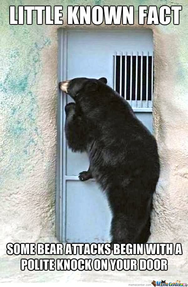 entertaining bear memes