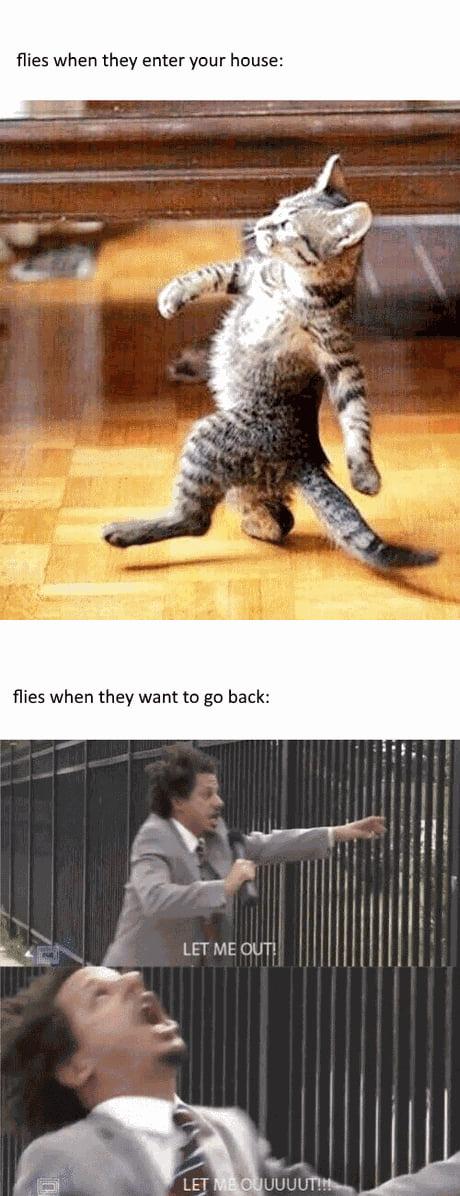 entertaining eric andre memes