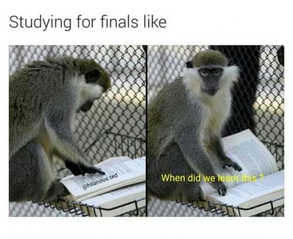 entertaining finals memes