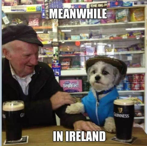 entertaining irish memes