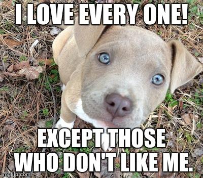 entertaining pitbull memes