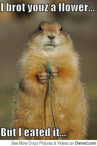 entertaining squirrel meme