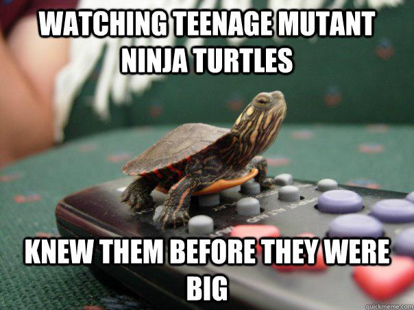 entertaining turtle meme