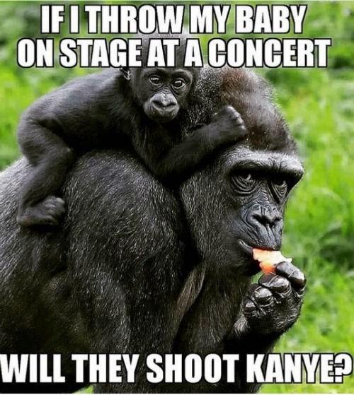 funny Harambe the Gorilla memes