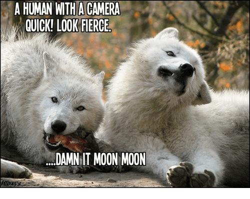 funny Moon Moon memes