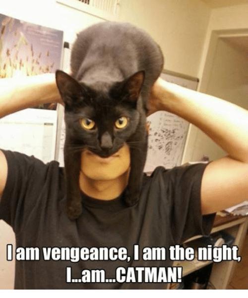 funny cat in the hat meme
