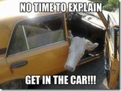 funny cow meme