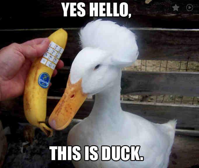 funny duck meme