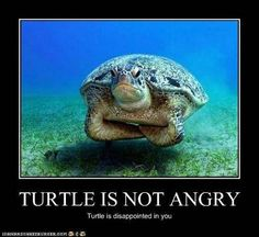 funny turtle meme