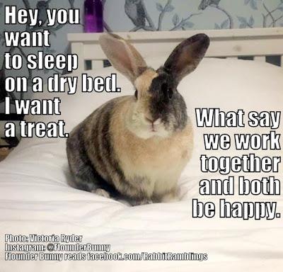 high spirited bunny memes