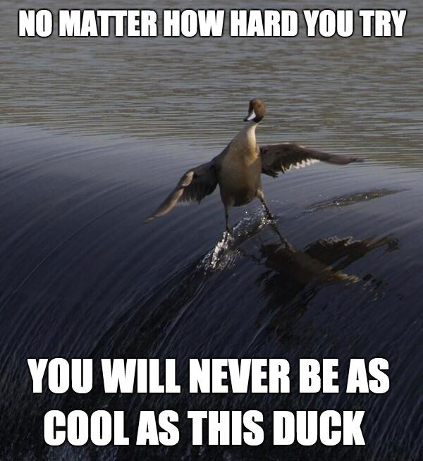 high spirited duck meme