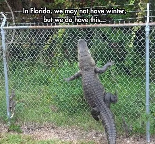 high spirited florida memes