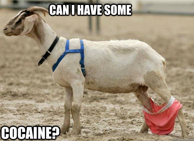 high spirited goat meme