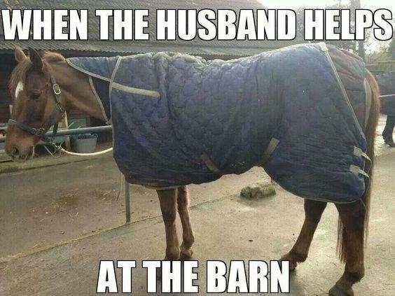 high-spirited horse memes