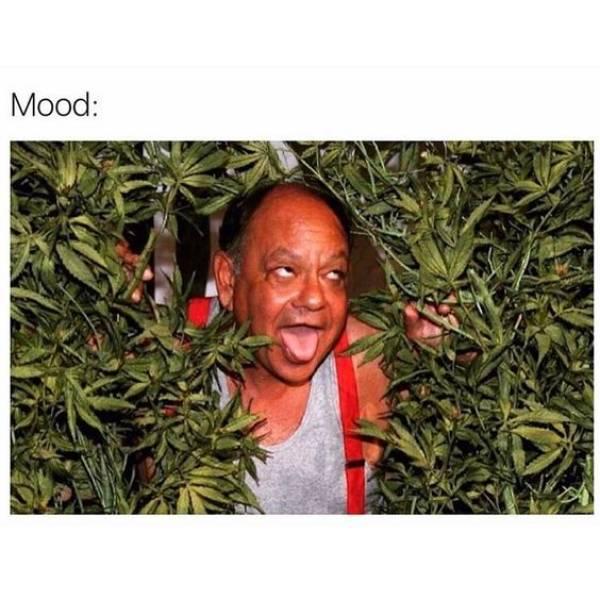 high-spirited stoner memes