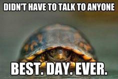 high-spirited turtle meme