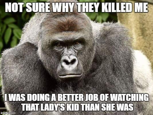 hilarious Harambe the Gorilla memes