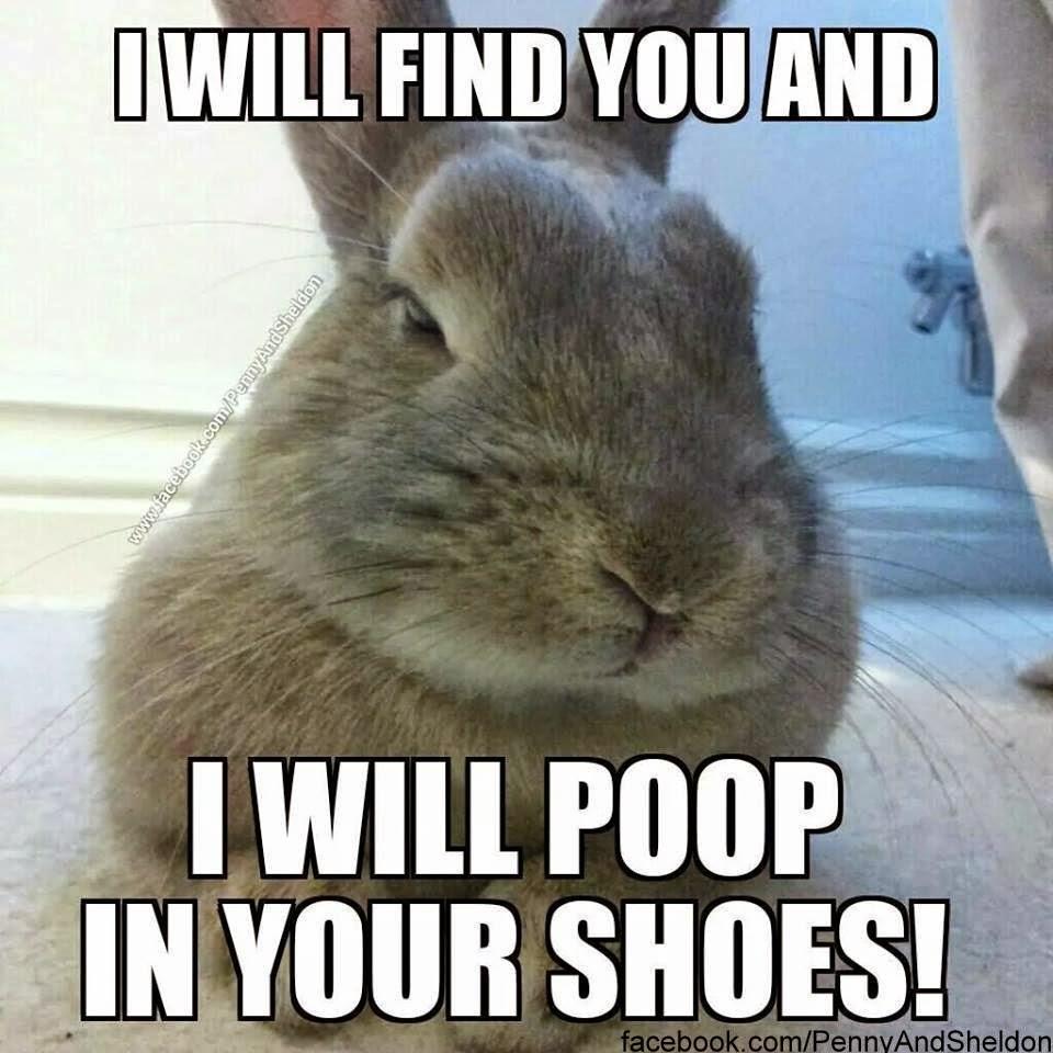 hilarious bunny memes