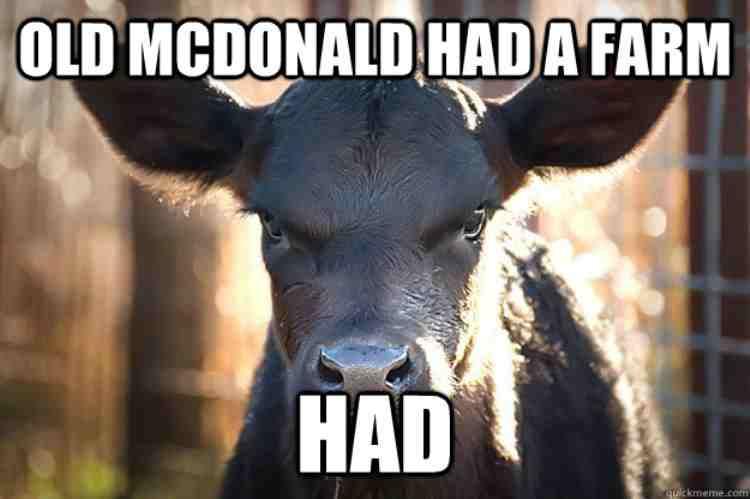 hilarious cow meme