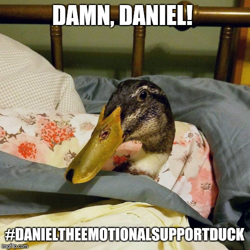 hilarious duck meme