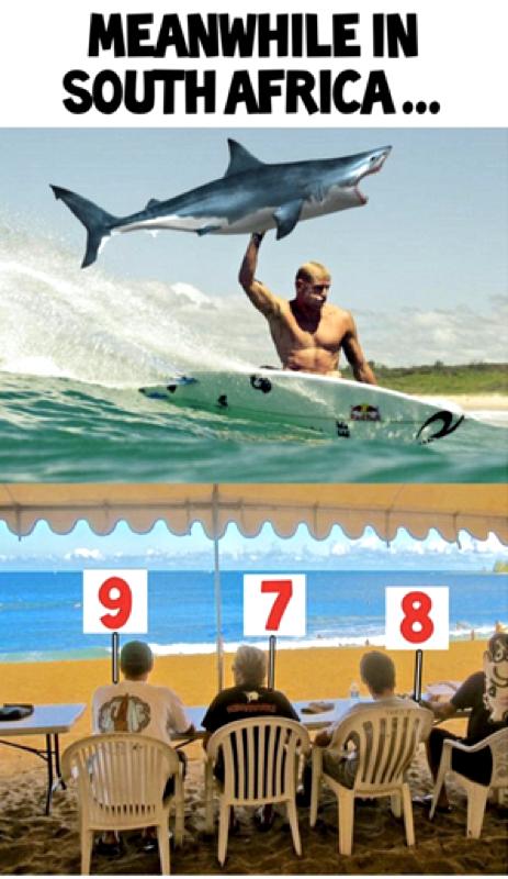 hilarious shark meme