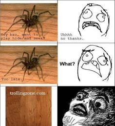 hilarious spider memes