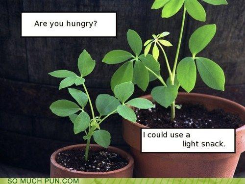 humorous biology memes