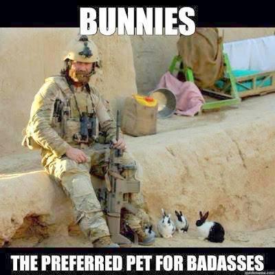 humorous bunny memes