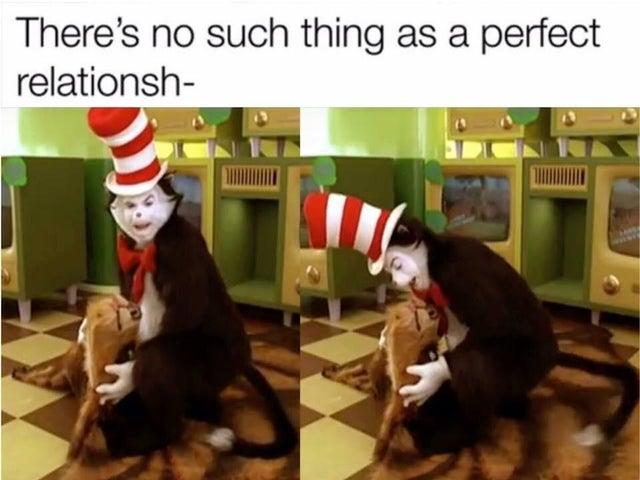 humorous cat in the hat meme