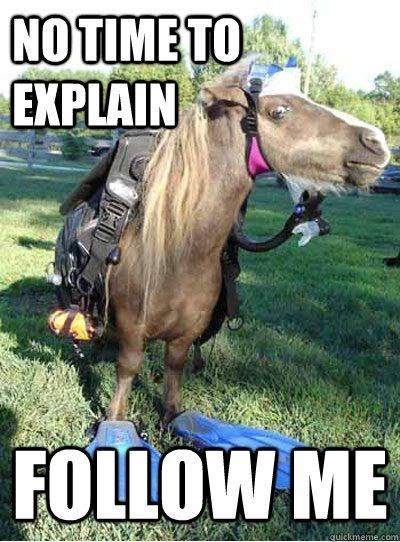 humorous horse memes